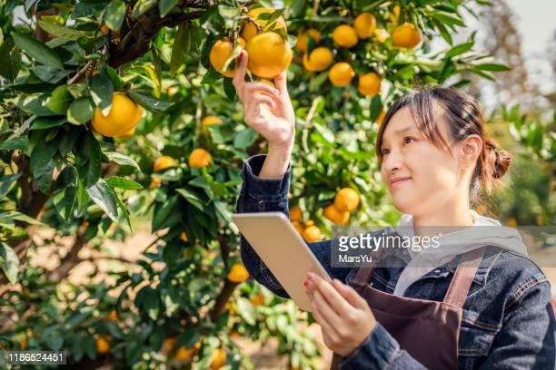 jovem técnica trabalhando no pomar - orange farm - fotografias e filmes do acervo