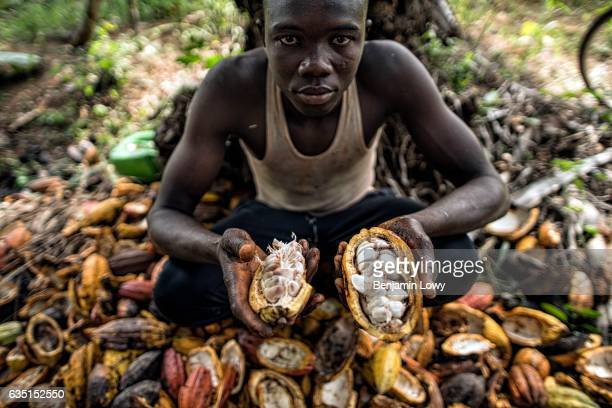 A young teen holds a cracked and open cocoa melon revealing its fleshy seeds Eventually the 'meat' of the fruit is discarded and the seeds set out to...