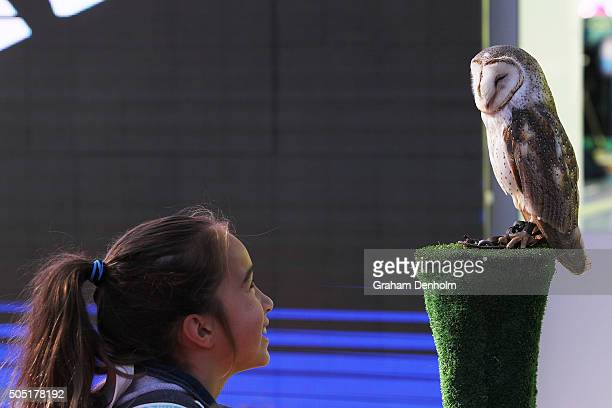 A young tennis fan looks at a Barn Owl during Kids Tennis Day presented by Nickelodeon ahead of the 2016 Australian Open at Melbourne Park on January...