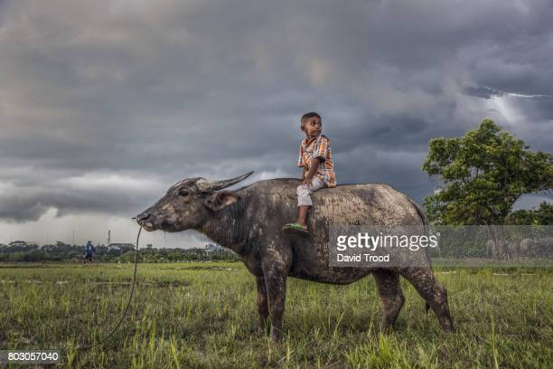 young thai boy on water buffalo - tame stock photos and pictures