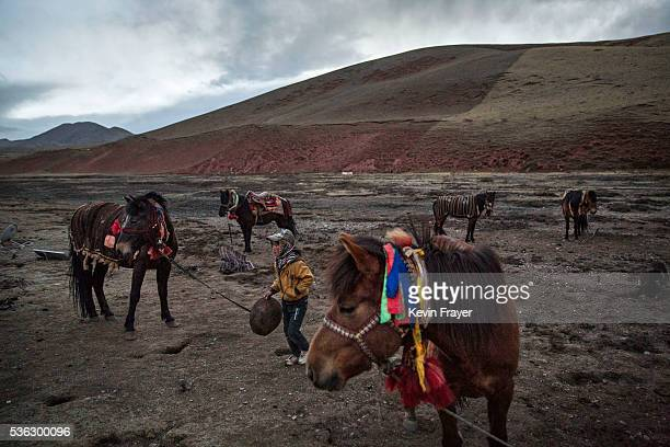 A young Tibetan boy tends to horses at a camp for cordycep pickers on May 23 2016 on the TIbetan Plateau near Zadoi in the Yushu Tibetan Autonomous...