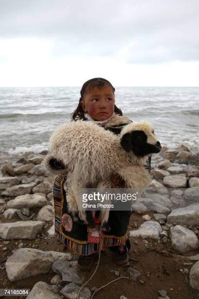 A young Tibetan child holds her lamb at the waterside of the Qinghaihu Lake on May 14 2007 in Gangcha County of Qinghai Province China Qinghaihu Lake...
