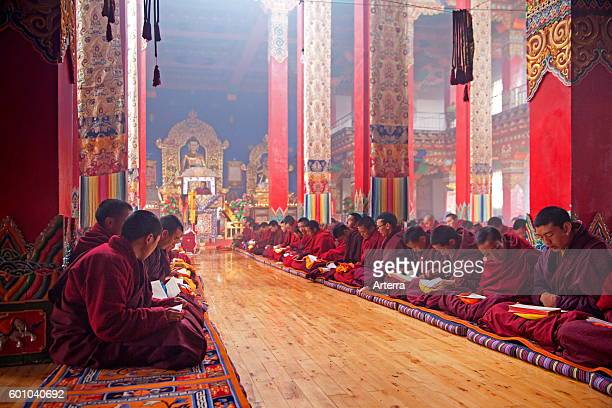 Young Tibetan monks saying mantras and meditating in Dzogchen Gompa / Deogchen monastery near Zhuqing Sichuan Province China