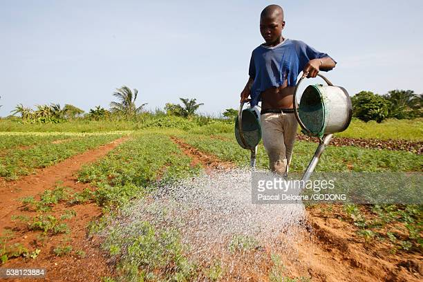 Young Togolese farmer watering crops
