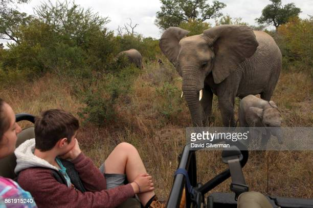 Young tourists watch an elephant and her calf feeding alongside them during a game drive on March 31 2015 at the Sabi Sands private game reserve in...