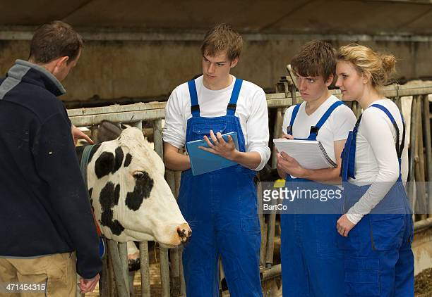 Young Trainees At Cattle Farm