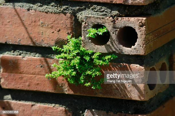 Young tree growing in brick wall