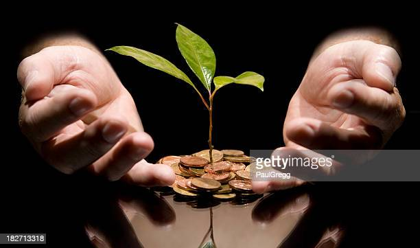 young tree growing out of coins protected by hands. - south african currency stock photos and pictures