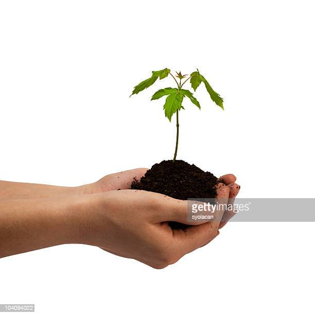 young tree in hands - syolacan stock pictures, royalty-free photos & images