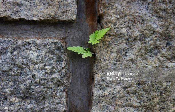 young tree in stone wall - endurance stock photos and pictures