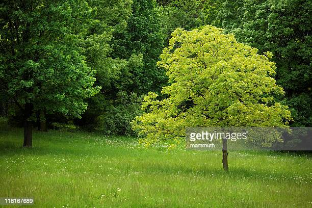 Young tree in the forest