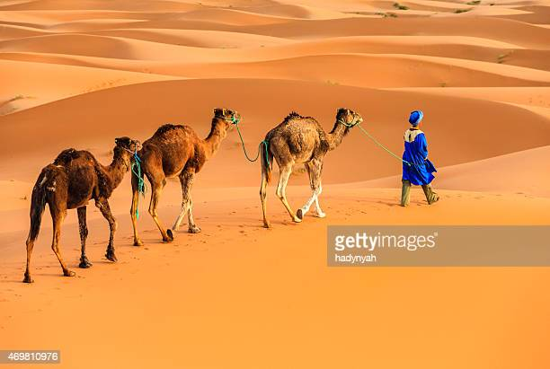 young  tuareg with camel on western sahara desert in africa - camel train stock pictures, royalty-free photos & images