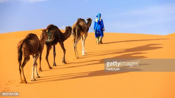 Young Tuareg con camellos en el desierto del sáhara del oeste en África