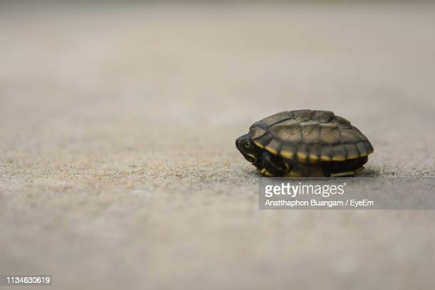 Young Turtle On Sand At Beach