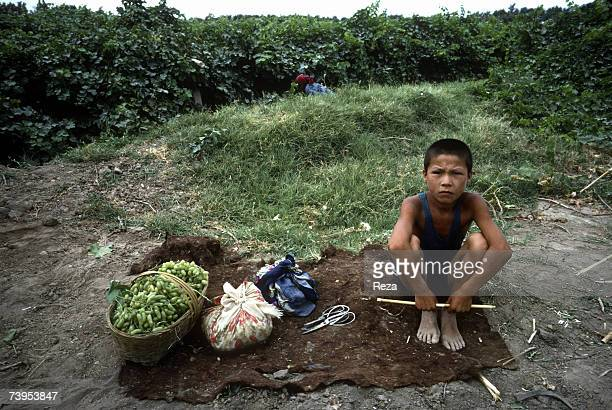 A young Uighur boy takes a break during the grape harvest in the valley of Turpan August 1995 in Turpan China