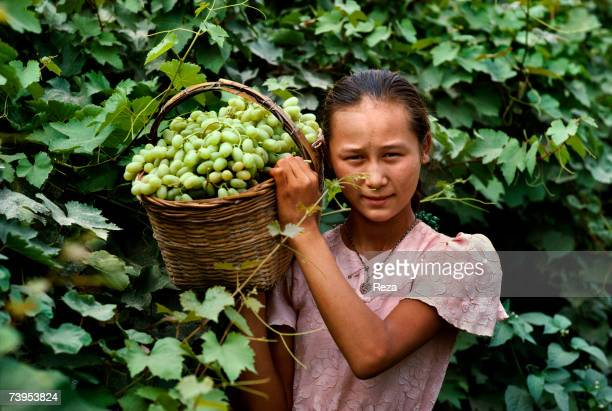 A young Uighur girl carries an osier basket full of grapes during the harvest in the valley of Turpan August 1995 in Turpan China