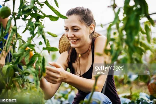 städtischen junglandwirt lächelnd bei der ernte von obst und gemüse - nur erwachsene stock-fotos und bilder