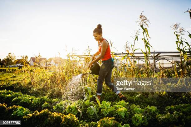 young urban farmer watering crops by hand - gemüsegarten stock-fotos und bilder