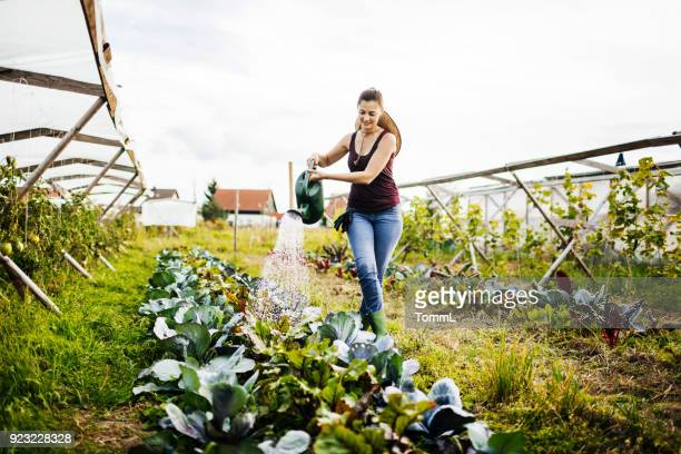 young urban farmer watering organic crops by hand - watering stock pictures, royalty-free photos & images