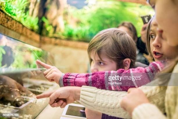 Young visitors at Exhibition of Giant African Snails on November 2 2017 in Kiev Ukraine