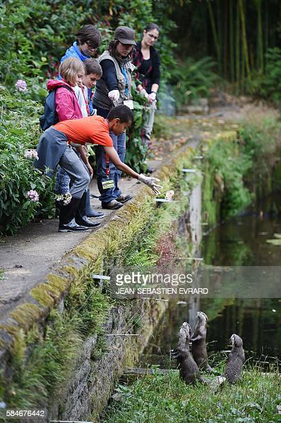Young visitors take the place of the animal keepers for a day and nourish otters, during a special operation at the zoo of Branfere on July 29, 2016...