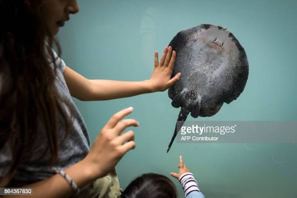 Young visitors watch a rayon the opening day of Aquatis the largest fresh water aquariumvivarium in Europe on October 21 2017 in Lausanne Aquatis...