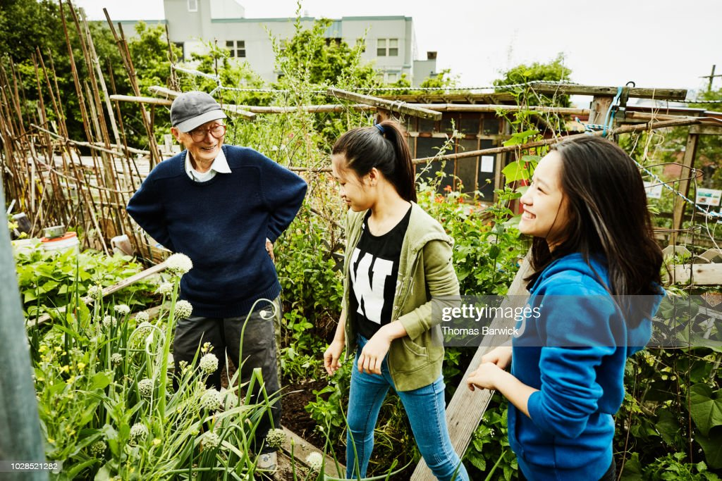 Young volunteers working with senior man in his vegetable patch in community garden : Stock Photo