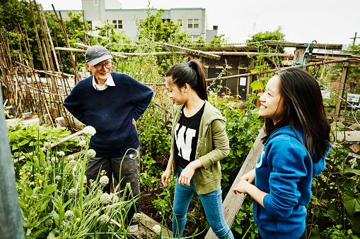 Young volunteers working with senior man in his vegetable patch in community garden - gettyimageskorea
