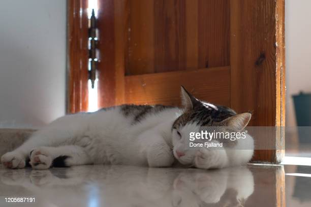 young, white and grey cat sleeping on a light terrazzo floor behind a wooden door - dorte fjalland imagens e fotografias de stock