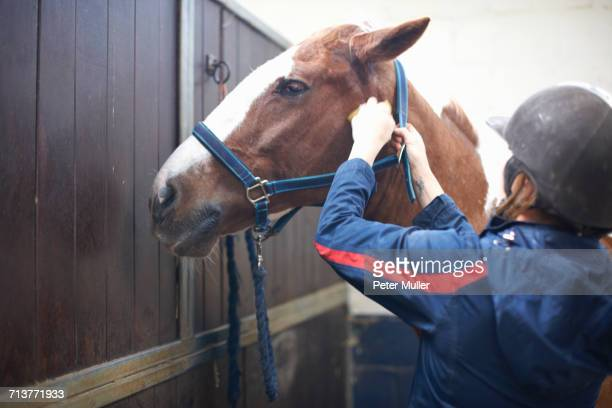 young woman adjusting horses bridle - riding hat stock pictures, royalty-free photos & images