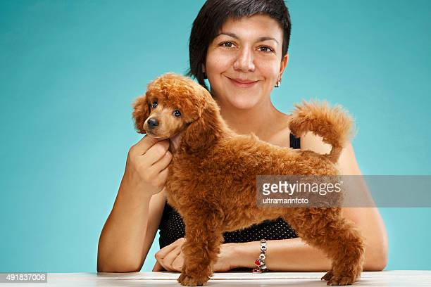 young woman and cute miniature poodle puppy dog  competition pose - miniature poodle stock photos and pictures