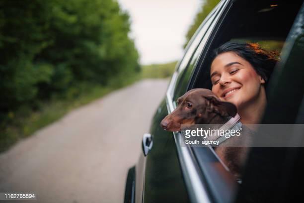 equitação da mulher nova e do cão em um carro - montar - fotografias e filmes do acervo