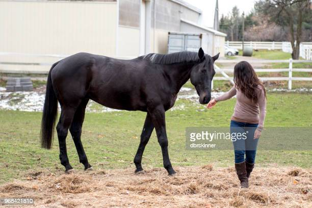 young woman and her horse - black hairy women stock pictures, royalty-free photos & images