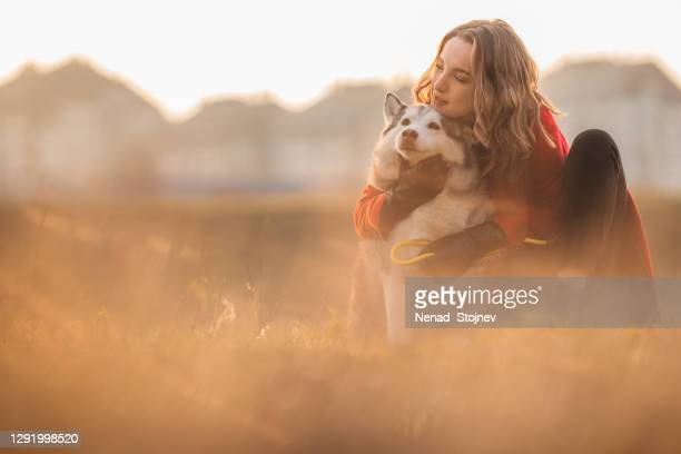 a young woman and her husky at sunset - husky dog stock pictures, royalty-free photos & images