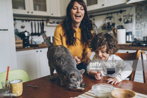young woman and little boy feeding cat - cat family stock pictures, royalty-free photos & images