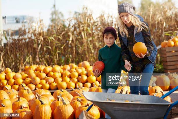young woman and son selecting pumpkins for wheelbarrow at pumpkin patch - pumpkin patch stock photos and pictures