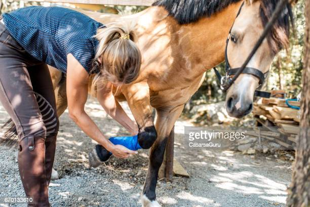 young woman applying bandage to injured horse - leg wound stock pictures, royalty-free photos & images