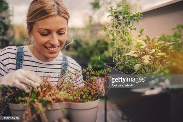 young woman arranging plants in her rooftop garden - urban garden stock pictures, royalty-free photos & images