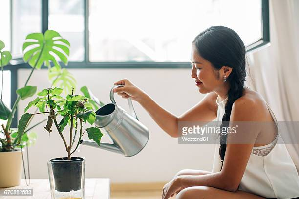 young woman at home watering plant - watering stock pictures, royalty-free photos & images