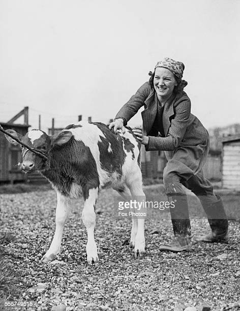 A young woman attempting to move a calf between enclosures while holidaying on a farm near Hatfield Hertfordshire 4th June 1938