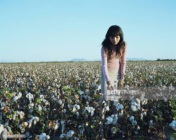 Young woman bending to pick cotton in field
