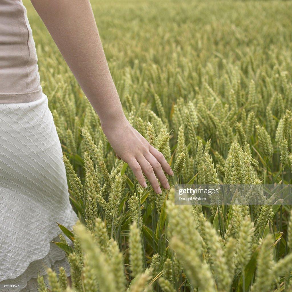 Young woman brushing hand through wheat field. : Stock Photo