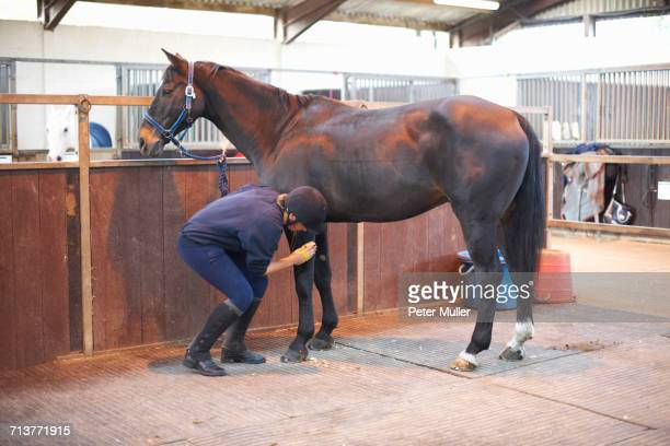 young woman brushing horse with horse brush - riding boot stock pictures, royalty-free photos & images