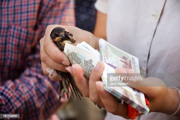 A young woman buys two sparrows at a small Buddhist temple along the riverside in Phnom Penh Buddhists across Southeast Asia believe that releasing...