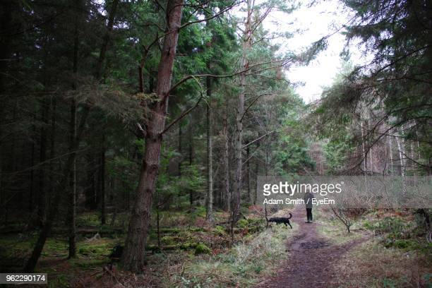 Young Woman By Dog On Footpath In Forest
