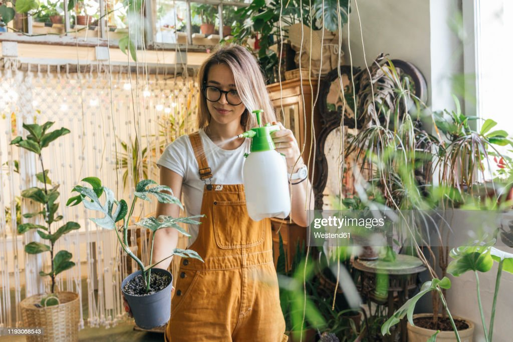 Young woman caring for plants in a small shop : Stock Photo