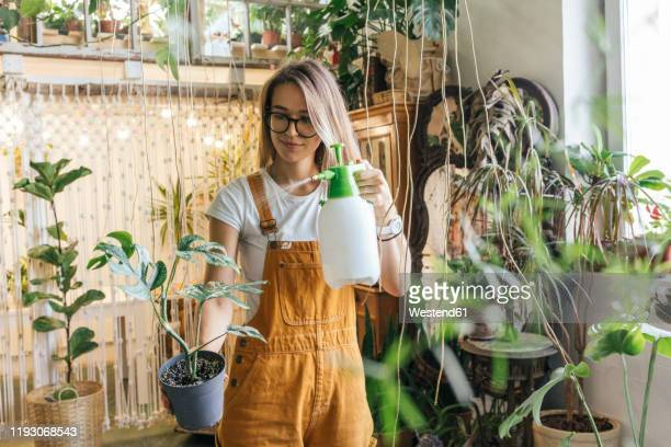 young woman caring for plants in a small shop - houseplant stock pictures, royalty-free photos & images
