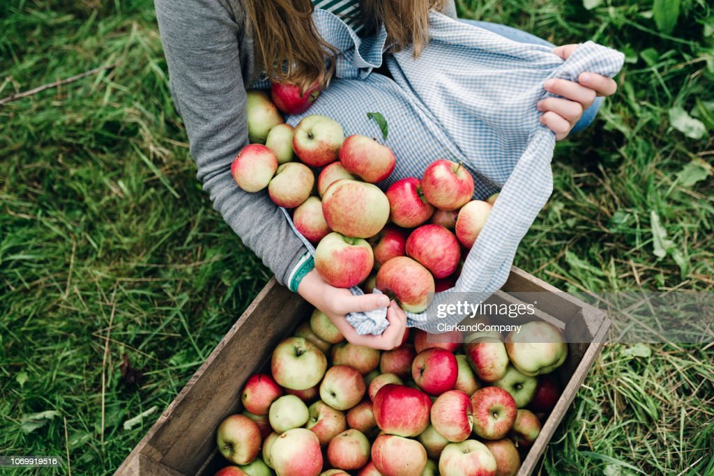 Young woman collecting apples in the fall : Stock Photo