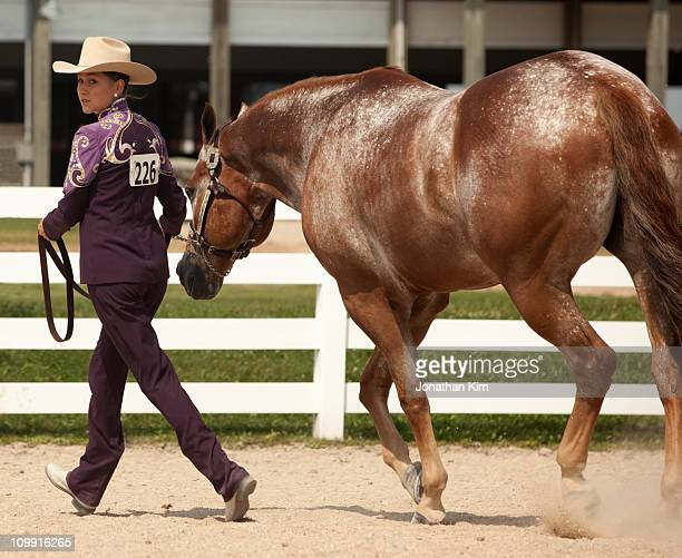 young woman competes at horse show. - livestock show stock pictures, royalty-free photos & images