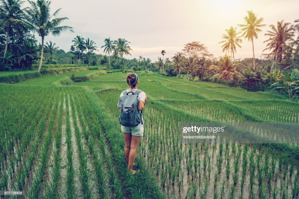 Jonge vrouw overweegt rijstvelden, Ubud - Bali : Stockfoto